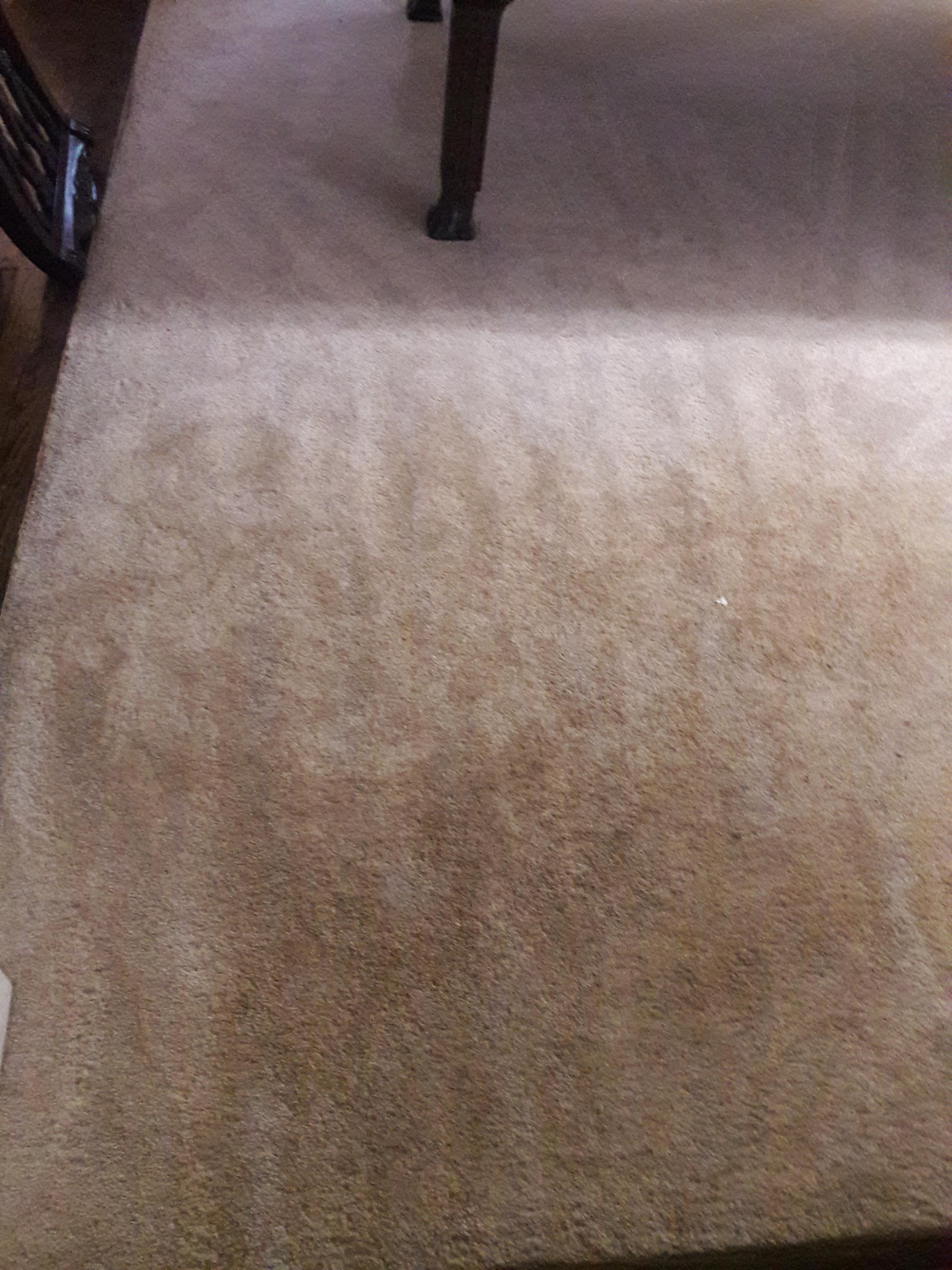Sears Carpet Cleaning Plaints Horrible Service Carpet